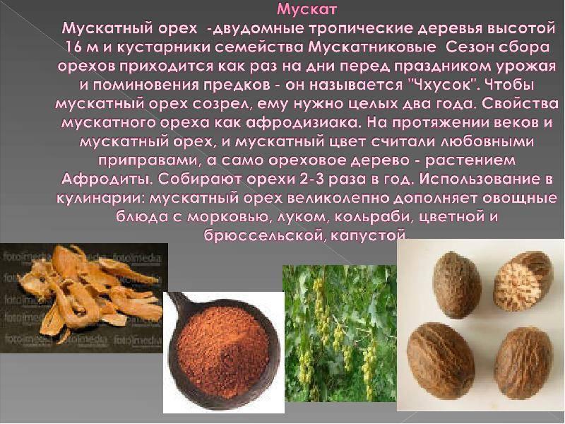 8 полезных свойств мускатного ореха, а также противопоказания и применение
