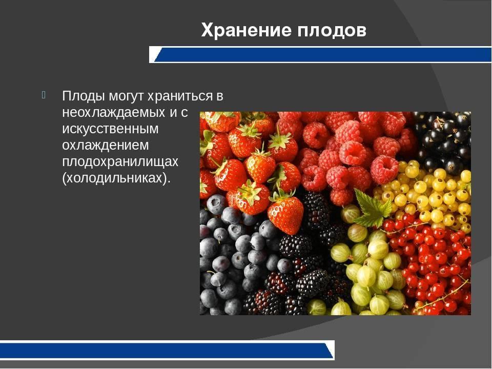Глава iv. хранение овощей и плодов в свежем виде [1969 наместников а.ф. - хранение и переработка овощей, плодов и ягод]