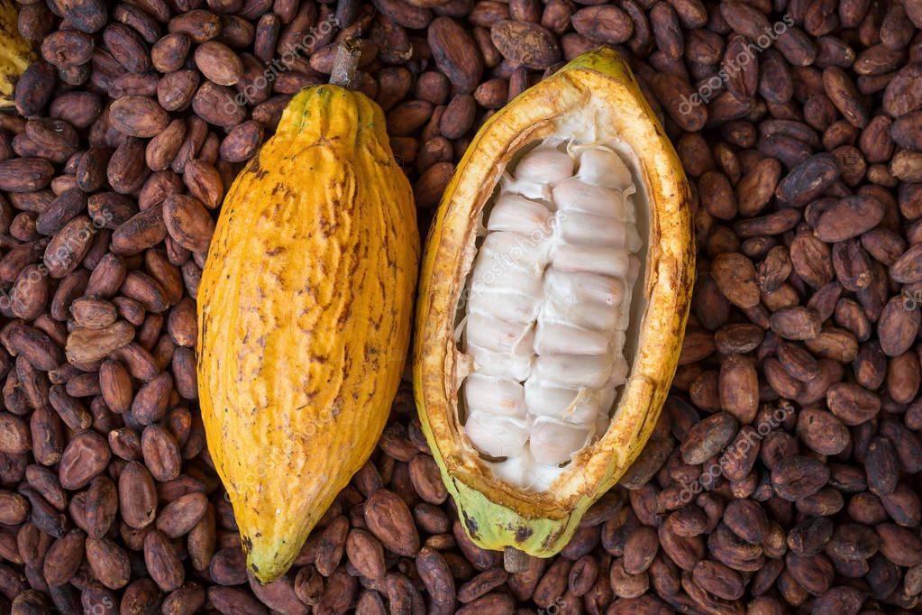 Польза, лечебные свойства и противопоказания к употреблению какао-бобов