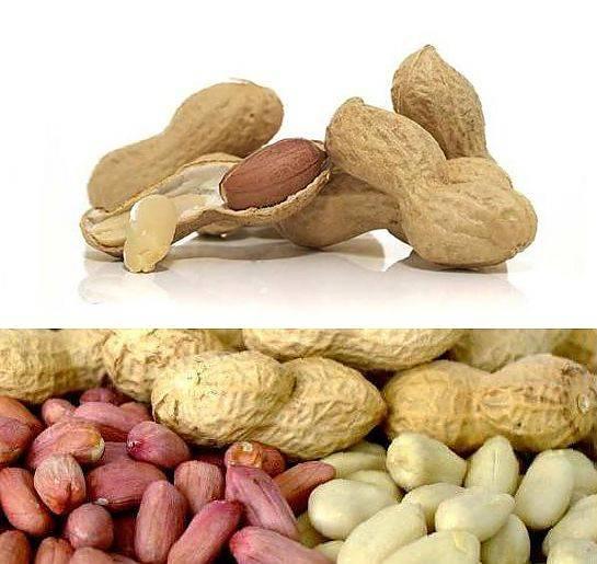 Арахис — польза и вред для нашего организма, калорийность и способы приготовления   здорова и красива