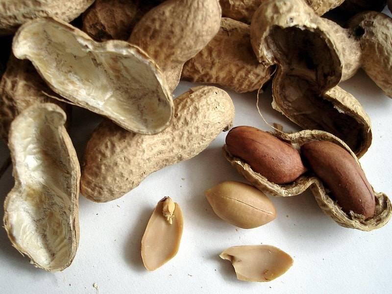 Виды арахиса: описание и характеристики сортов, полезные свойства, выращивание