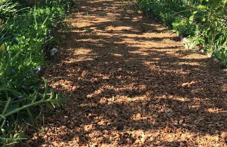 Лечебные свойства скорлупы грецкого ореха: возможности применения для здоровья, чем полезна, как использовать, противопоказания, что можно сделать из нее