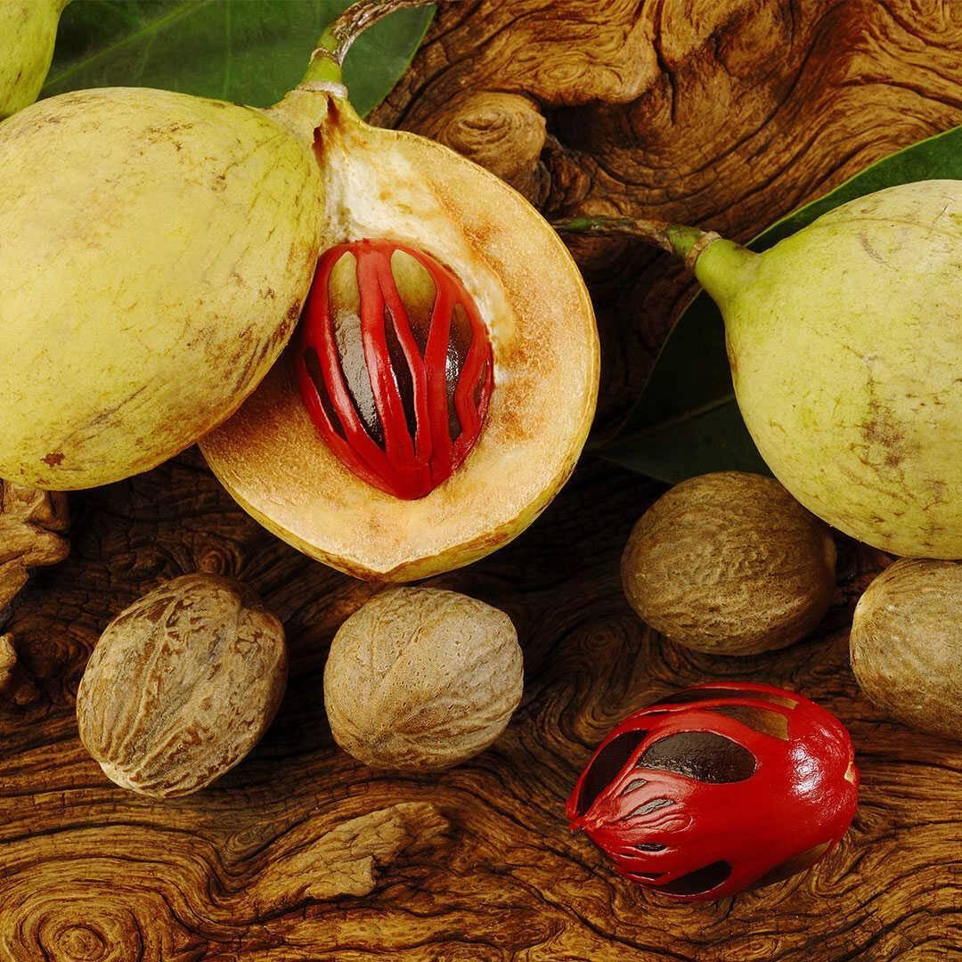 Польза и вред мускатного ореха, отзывы