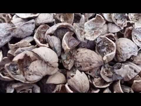 Скорлупа грецкого ореха: применение в огороде, на даче, в саду