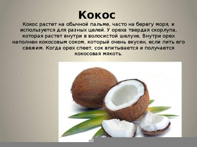Кокос: полезные свойства для организма человека