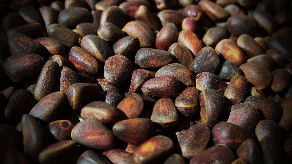 10 рецептов настойки на скорлупе кедровых орехов: для застолья и народной медицины