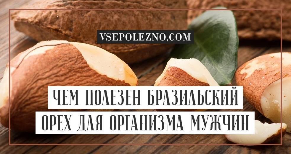 Бразильский орех: полезные свойства и противопоказания, цена