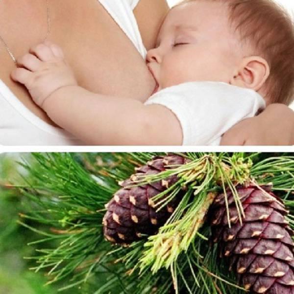 Список разрешенных орехов при грудном вскармливании   компетентно о здоровье на ilive