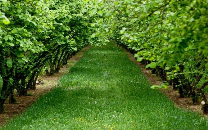 Биозащита садов