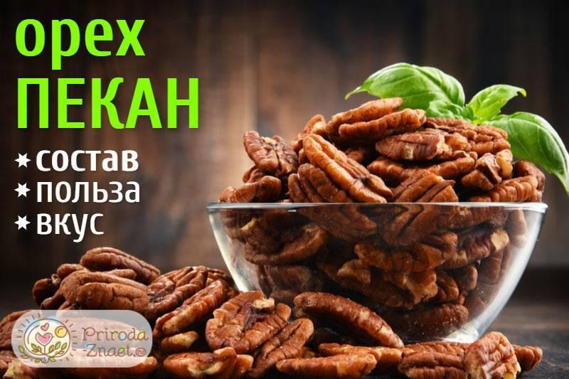 Орех пекан: польза и вред для организма человека