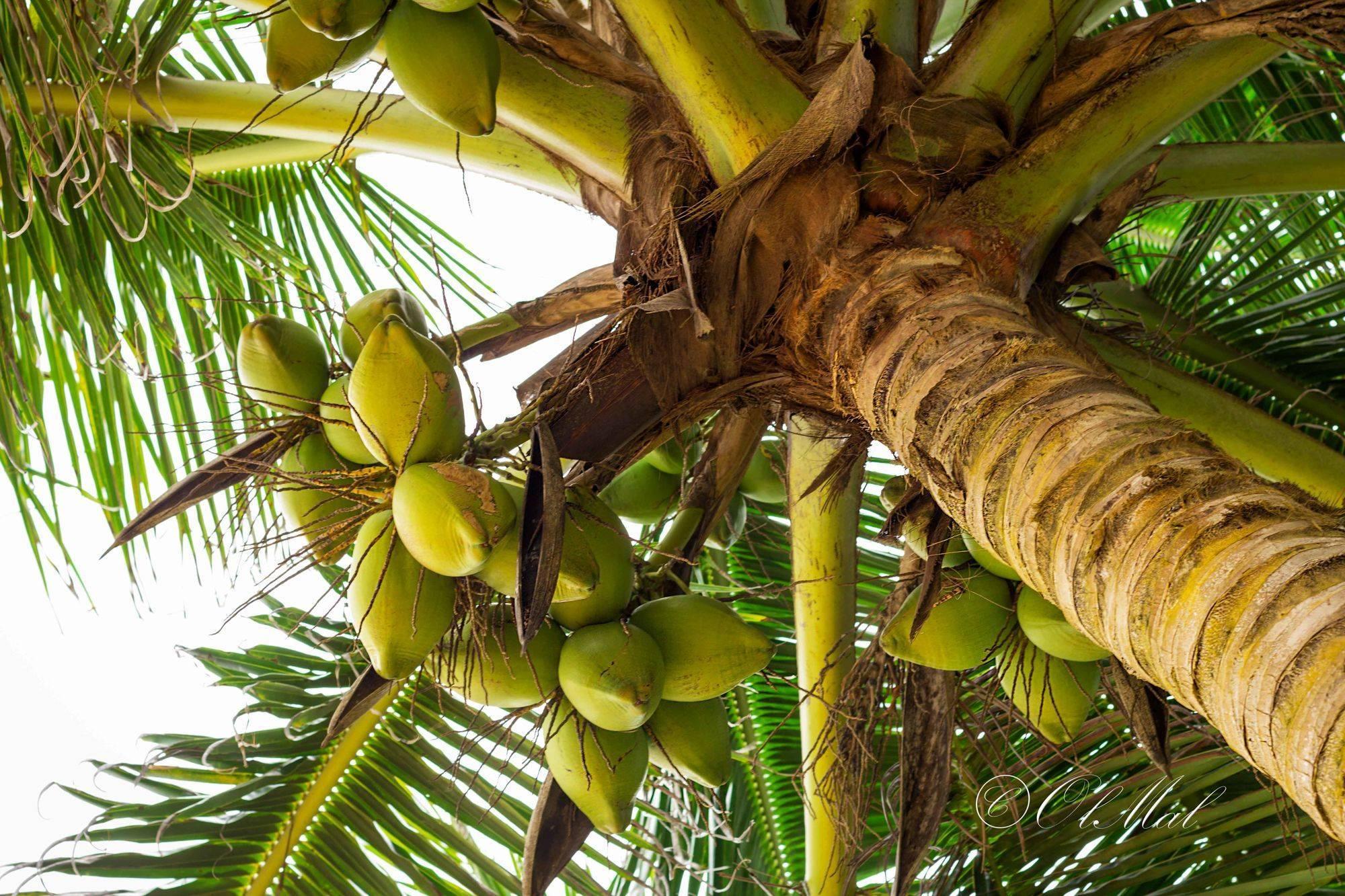 В каких странах растут бананы, как размножаются и каков их жизненный цикл в природе?