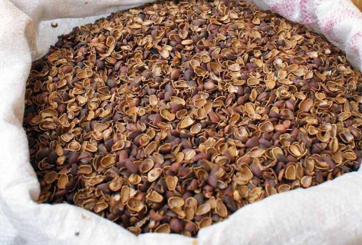 Кожура кедрового ореха от кашля