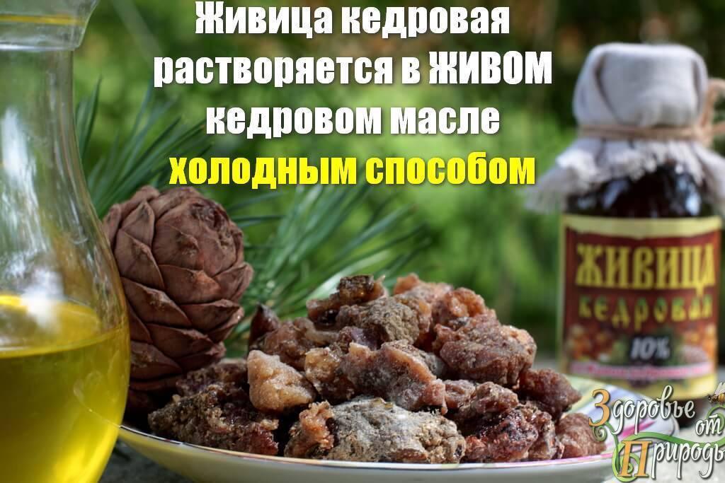Чем полезна кедровая живица, рецепт приготовления, способы применения