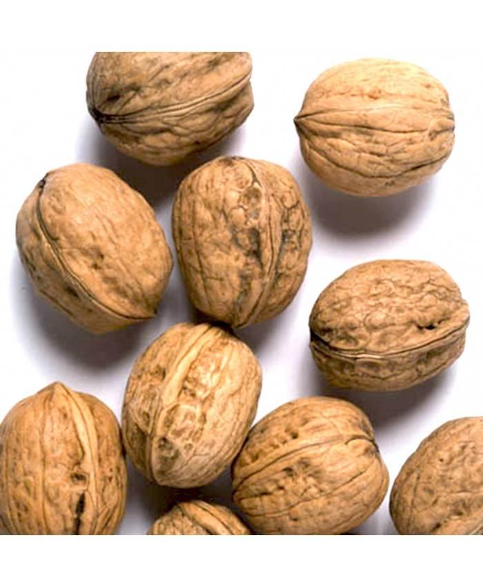 Инструкция по посадке и уходу за орехом саратовский идеал — портал ореховод