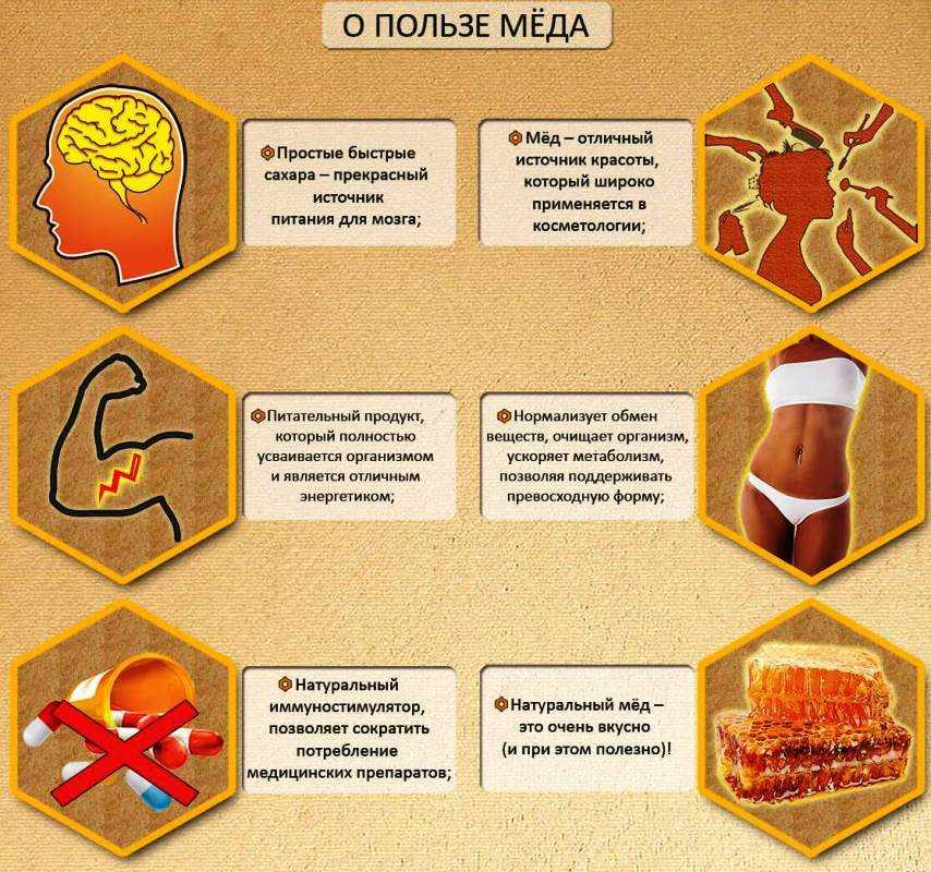Полезные свойства меда: какие болезни он лечит и как правильно его принимать