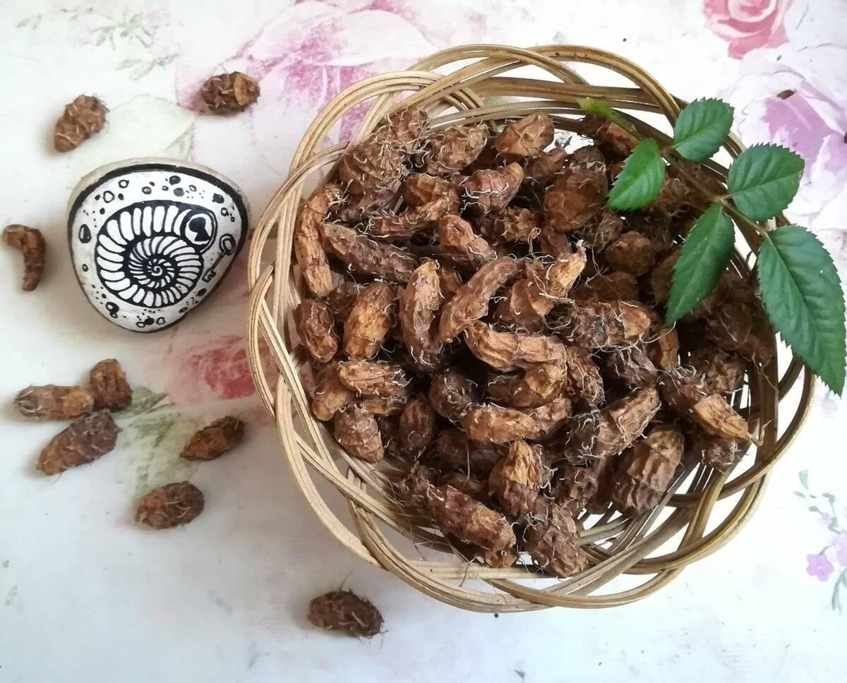 .орех чуфа выращивание и сбор урожая. как я этот делала.