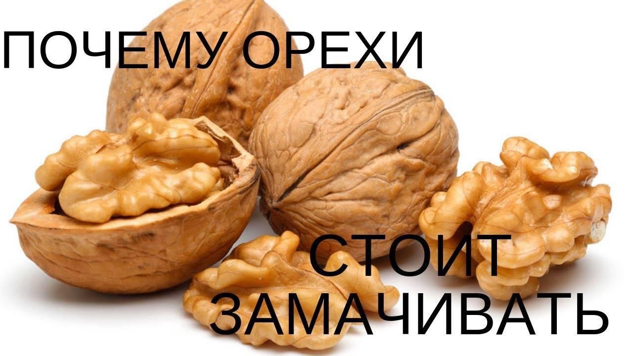 Почему горчат грецкие орехи? как убрать прогорклость орехов?