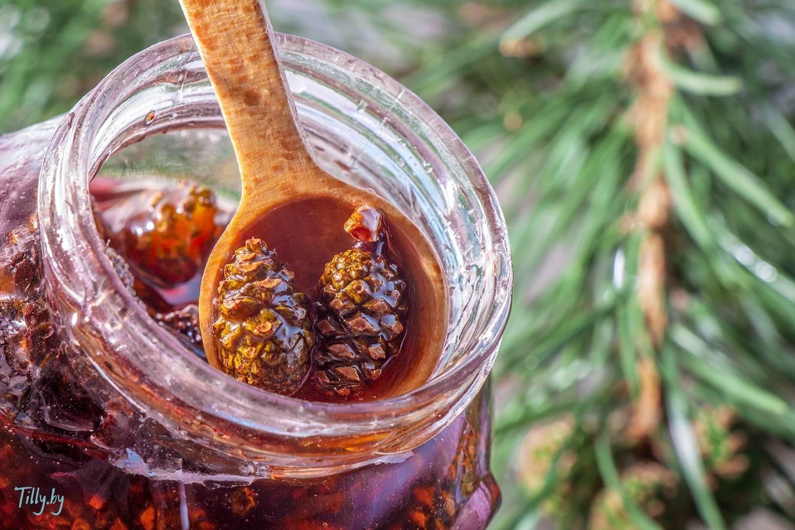 Варенье из шишек сосны, ели и кедра: рецепты, польза и вред