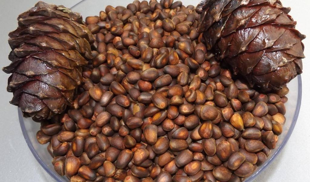 Как хранить кедровые орехи в домашних условиях, в том числе очищенные