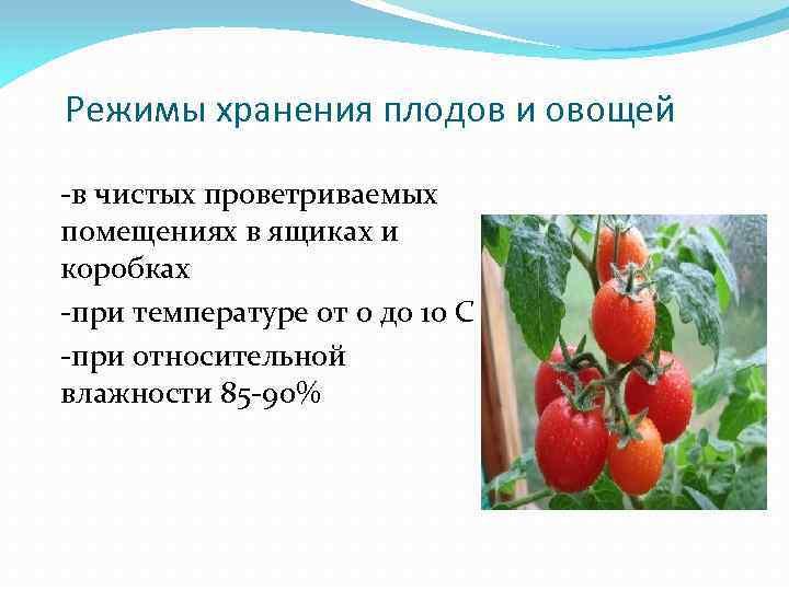 18 советов, как сохранять свежесть овощей и фруктов ⋆