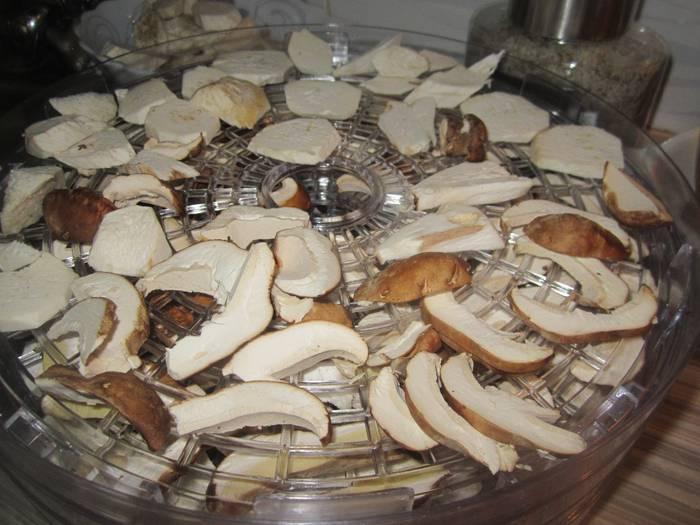 Как на зиму сушить грибы. какие грибы можно сушить