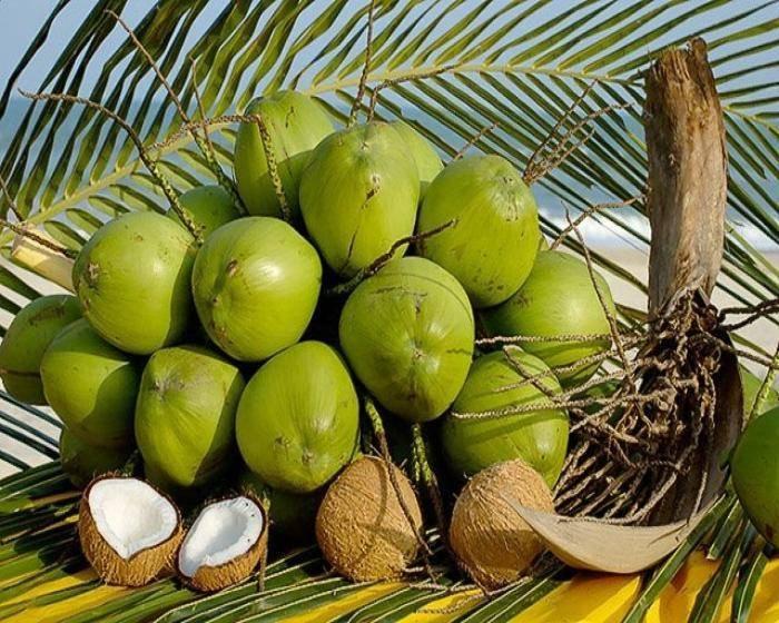 Самые интересные и полезные факты о кокосах