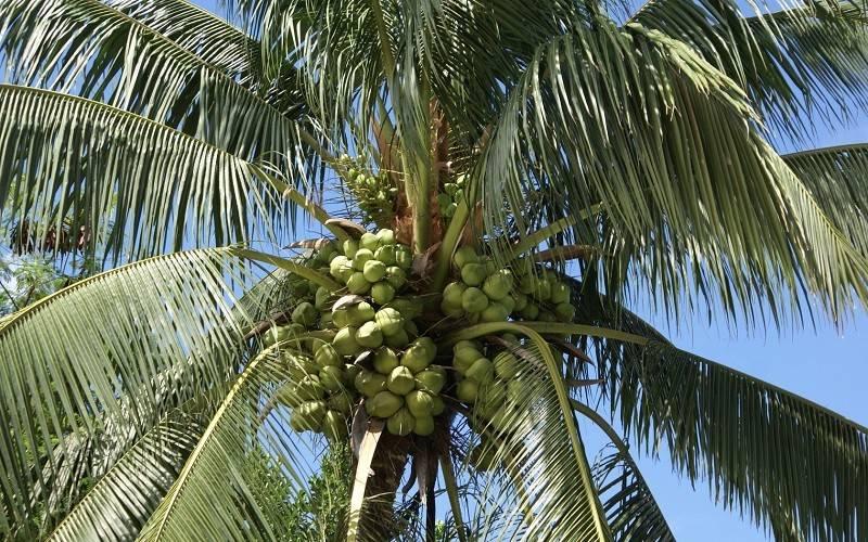 На каких деревьях и кустарниках, кроме орешника, растут орехи? что относится к таким плодам и как они выглядят?