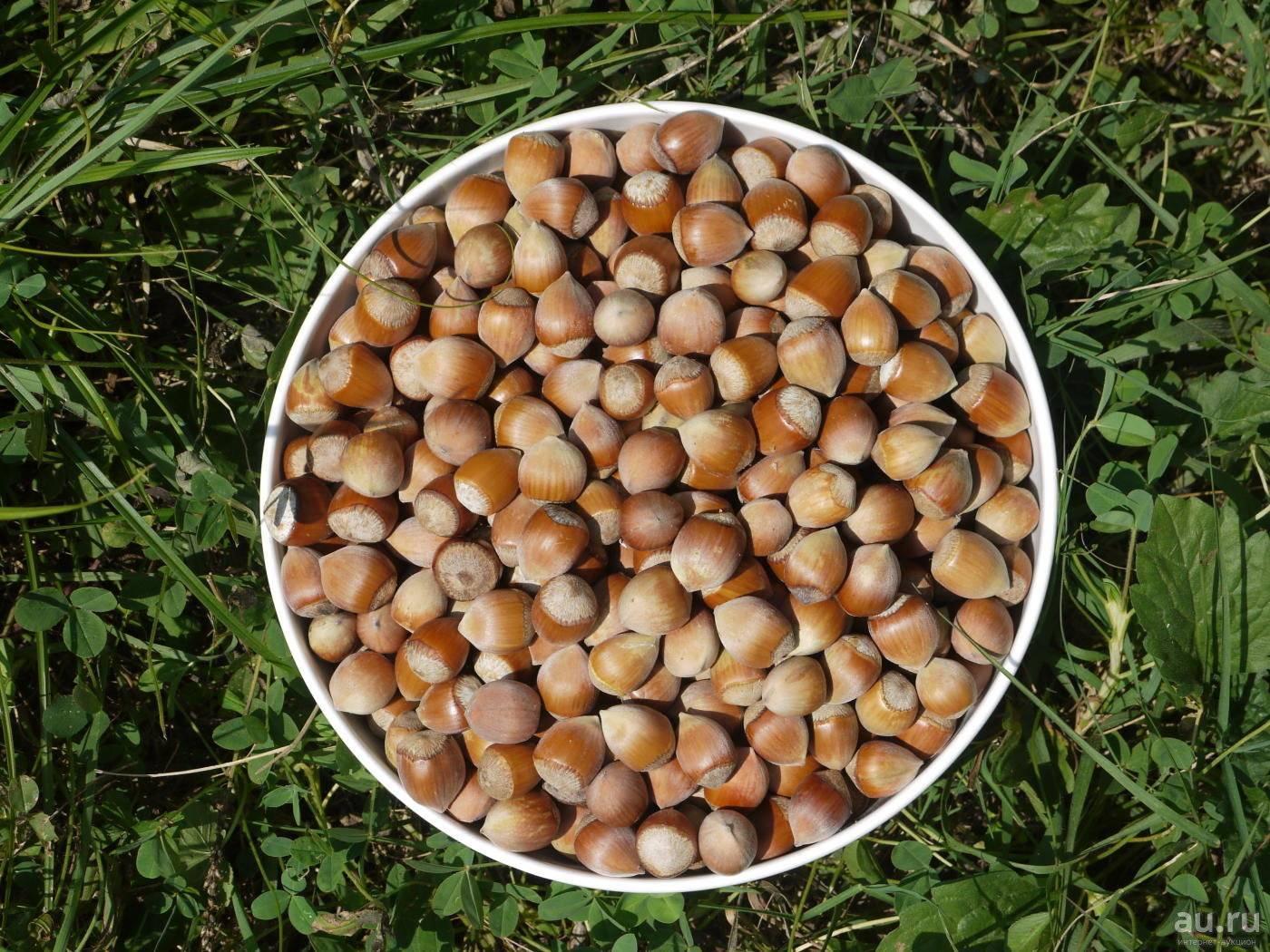 Как заработать на выращивании фундука в Украине?