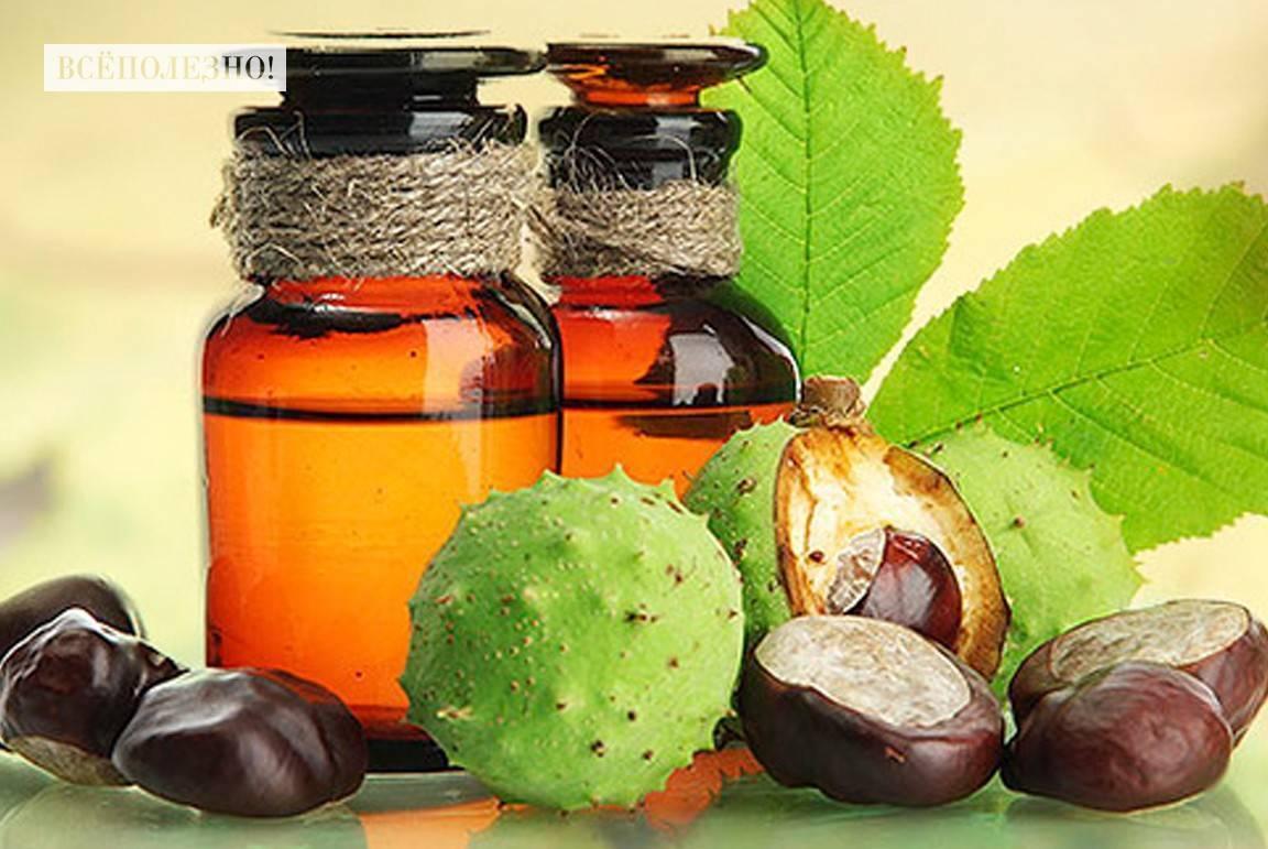 Польза и вред конского каштана, лечебные свойства, рецепты, фото, отзывы