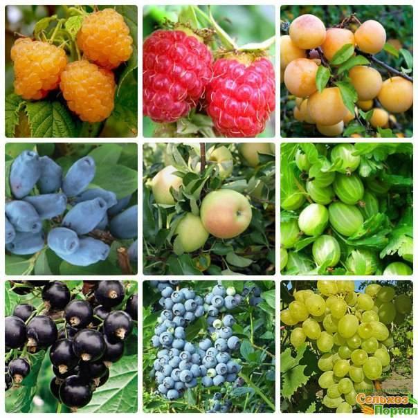 Плодово-ягодные культуры и орехи | good-tips.pro
