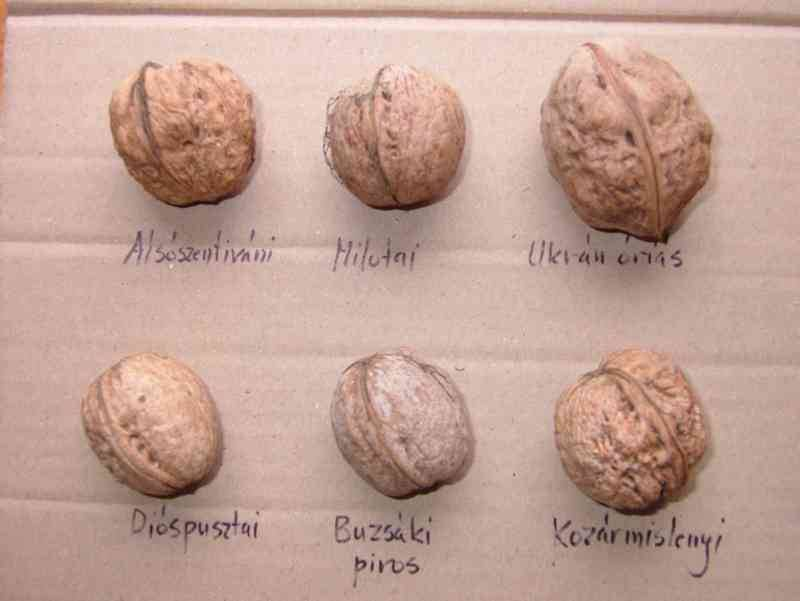 Обрезка грецкого ореха сорта Chandler