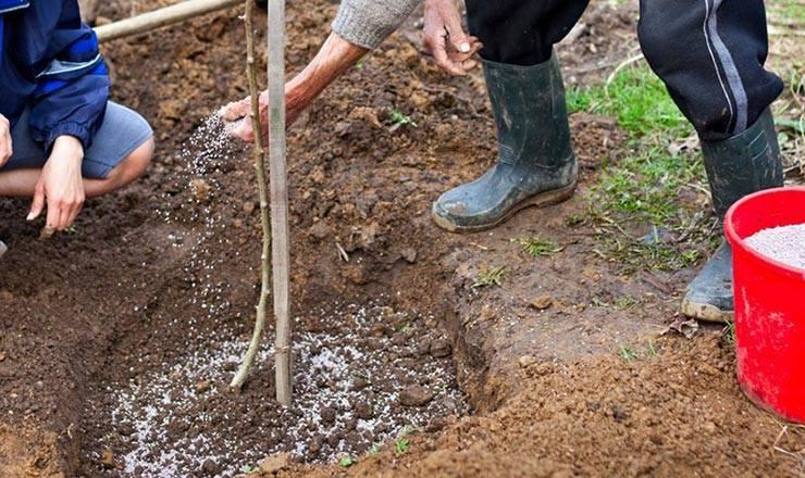 Подкормка/удобрение деревьев и кустарников по сезонам и типам