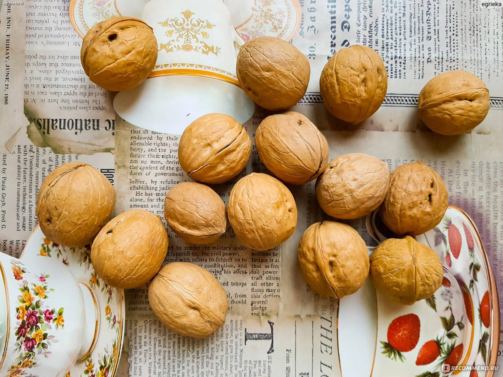 Способы удаления зеленой кожуры грецких орехов. как правильно их очистить и что нужно предпринять для защиты рук?