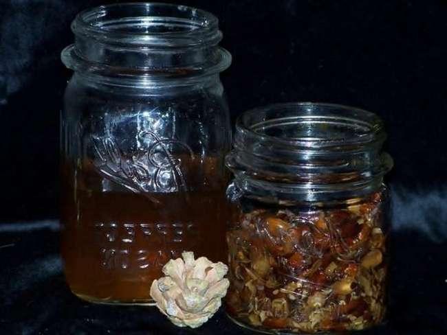 Настойка сосновых шишек — польза и вред, как принимать | здоровье и красота