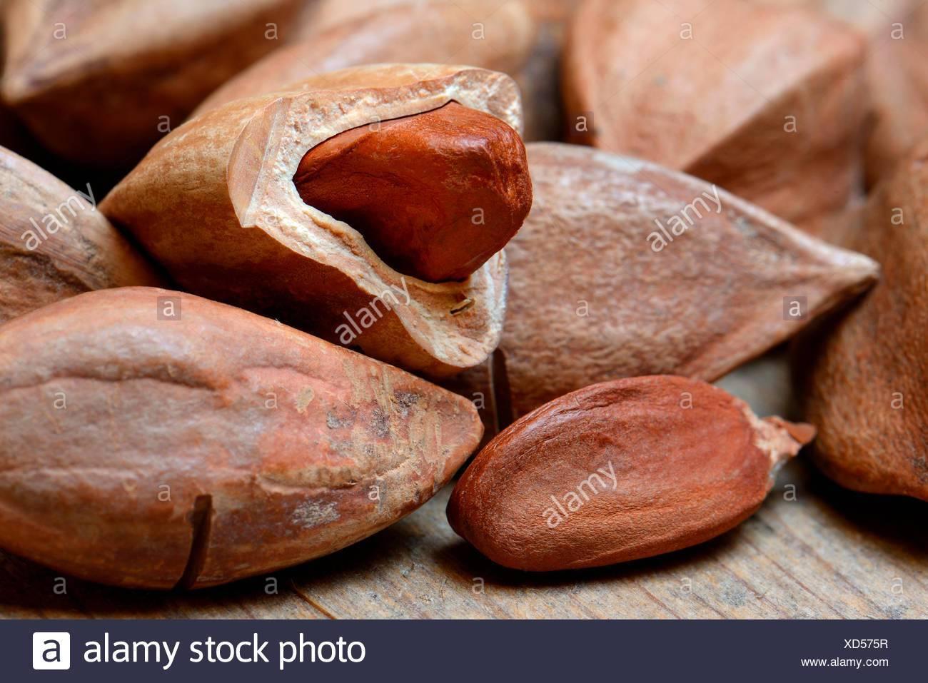 Орех пекан: польза и вред, полезные свойства
