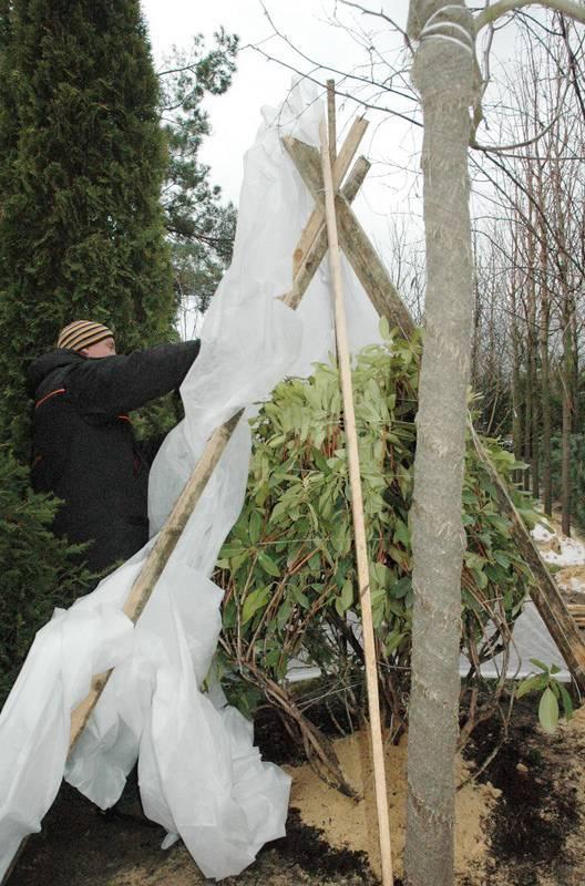 Как и чем укрыть молодые плодовые деревья на зиму: нужно ли обматывать стволы, фото