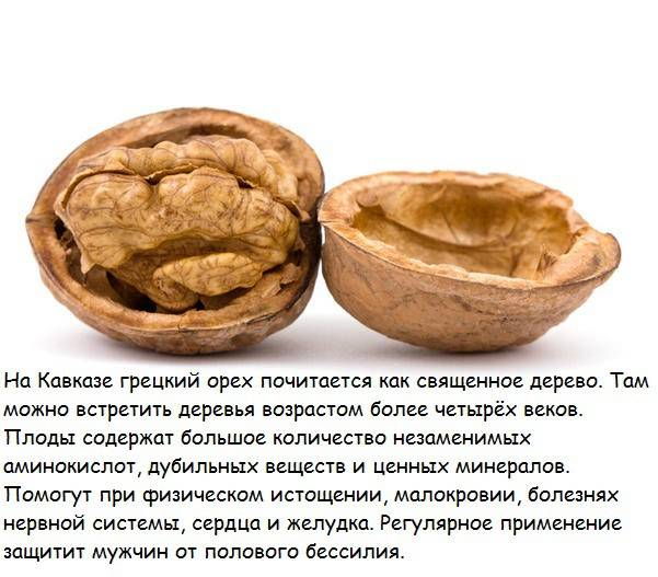 Грецкий орех кореновский: описание сорта и внешний вид, история появления и перечень отличий, а также правила выращивания и иные особенности