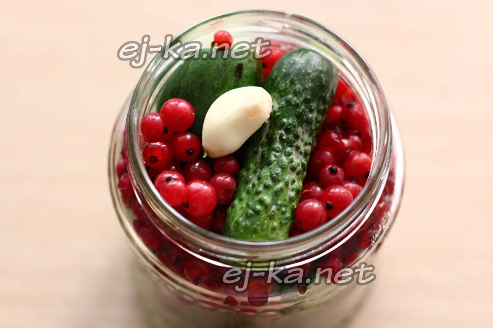 Огурцы с красной смородиной на зиму — 5 самых вкусных рецептов