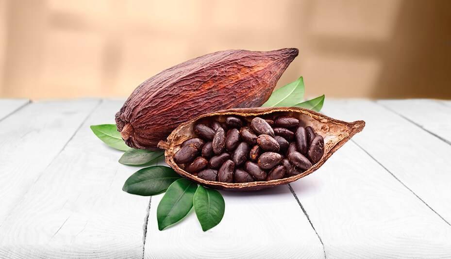 Какао-бобы - состав и свойства. польза какао-бобов