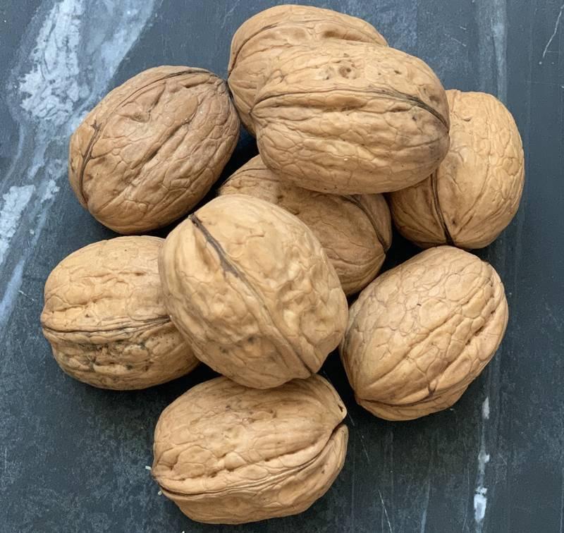 Выращивать грецкий орех в казахстане — не экзотика — forbes kazakhstan