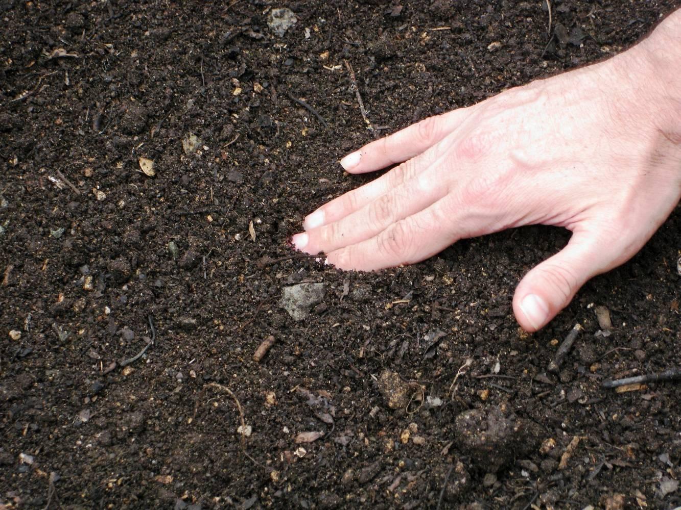 Подготовка почвы к посадке орехового сада