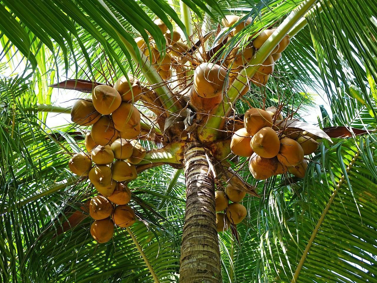 Как растет ананас в природе, в каких странах? - sadovnikam.ru