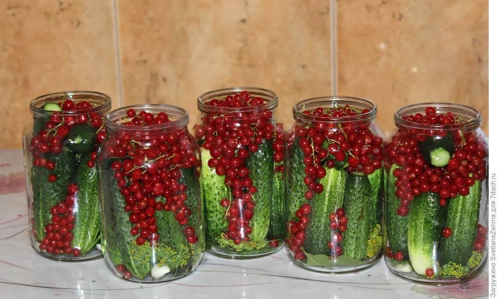 Огурцы с красной смородиной - 5 вкусных рецептов без уксуса