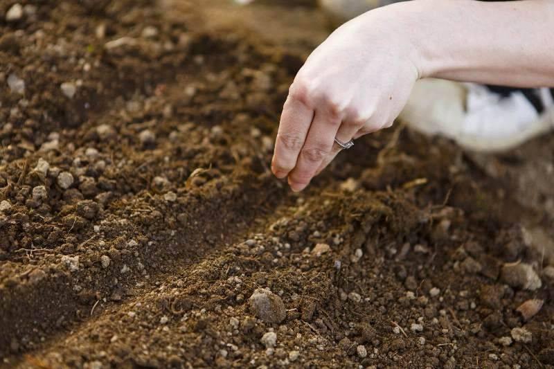 Как правильно посадить и вырастить арахис на огороде: инструкция и полезные советы