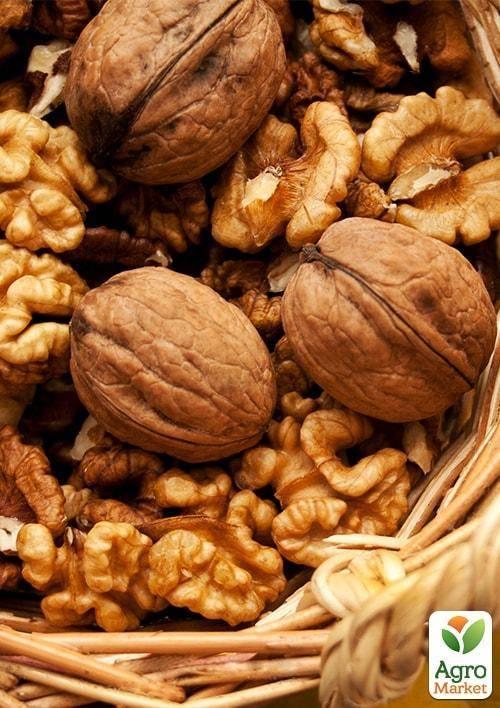 Российские сорта грецкого ореха — портал ореховод