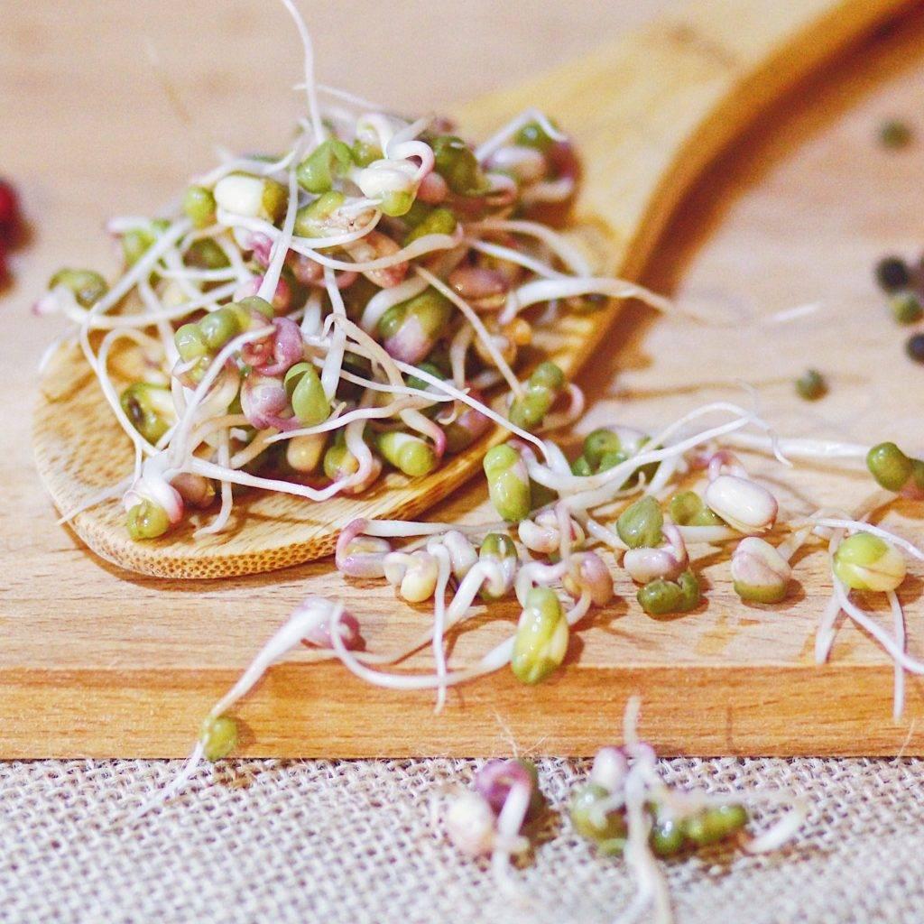 Пророщенные семена злаков - здоровье от природы! способы проращивания и рецепты из проростков | кулинария - всё pro еду!