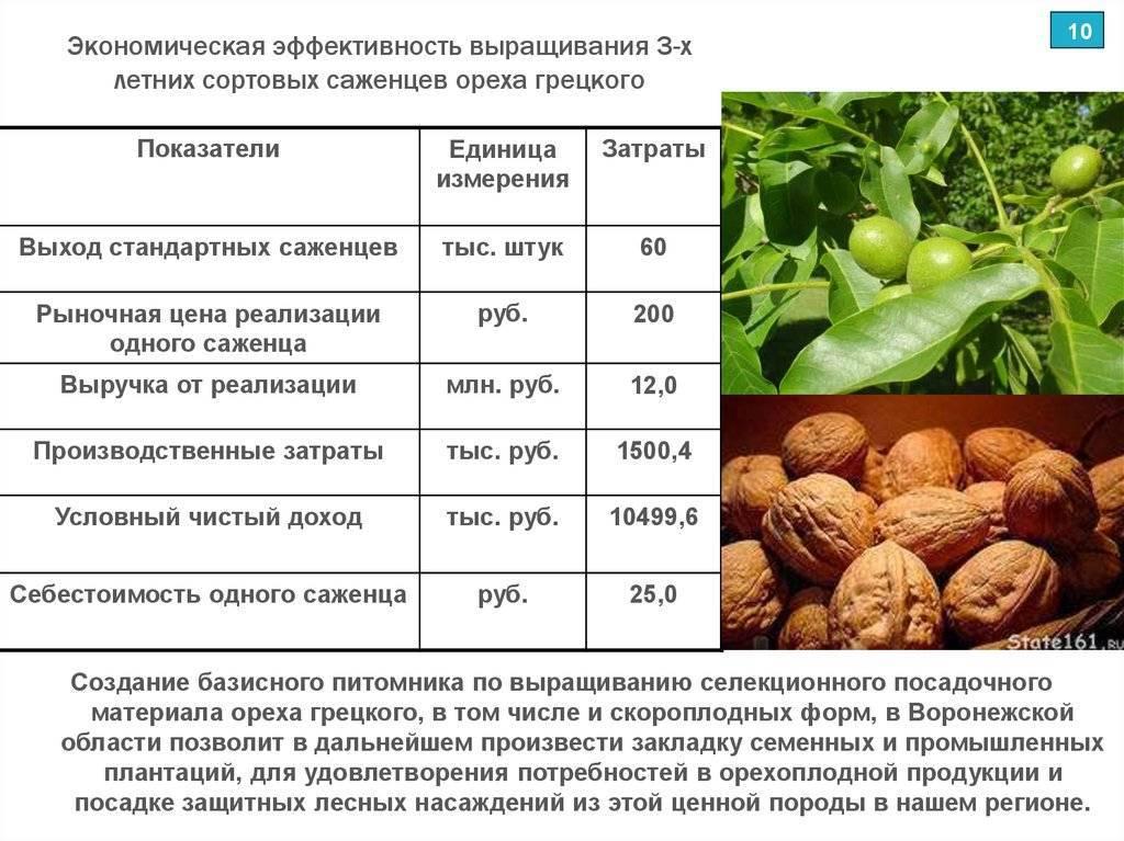 Промышленное выращивание орехов