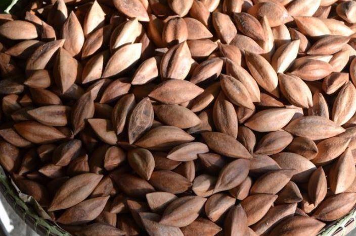Орех пекан польза и вред для организма женщины, мужчины и детей