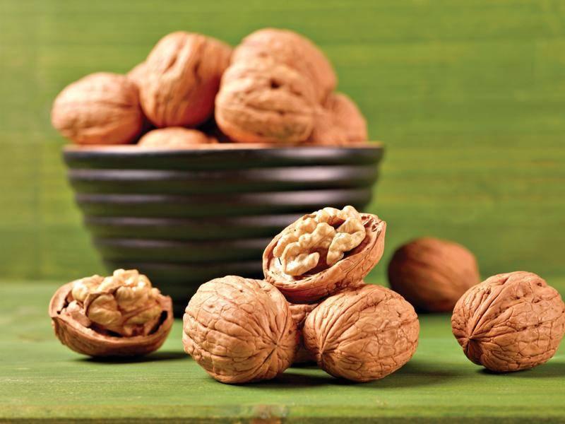 Лечебные свойства и противопоказания грецкого ореха, в чём заключаются полезные качества