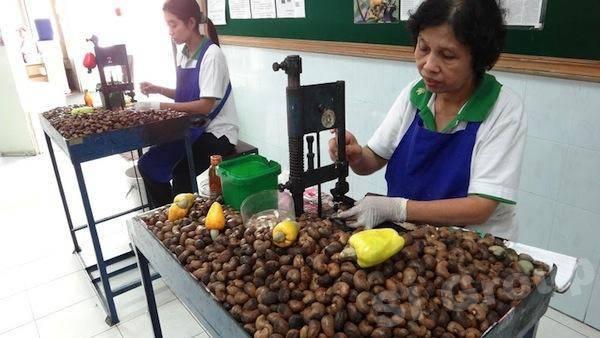 Когда и как правильно есть орехи кешью, нормы при беременности, гв и детям - орех эксперт